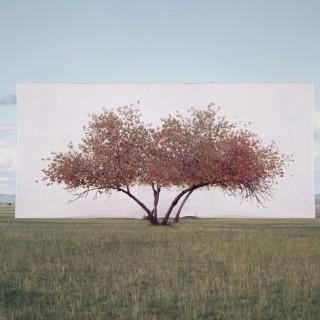 Tree Abroad No.2