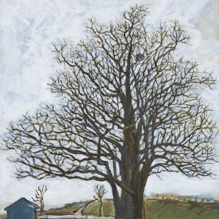 강화교동 은행나무