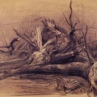 쓰러진 나무