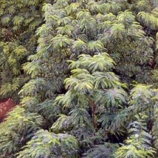 팔월의 숲
