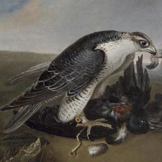 새를 잡아 먹는 매