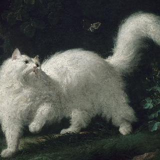 나비를 노리는 흰색 앙고라 고양이