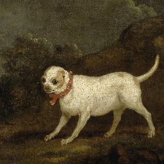 빨간 리본으로 장식한 강아지