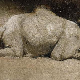 무릎을 꿇고 앉은 단봉낙타