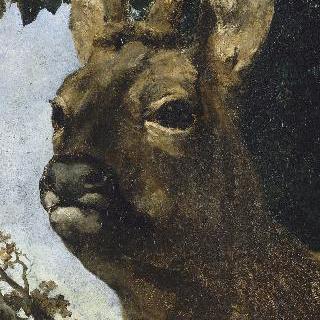 어린 사슴의 머리