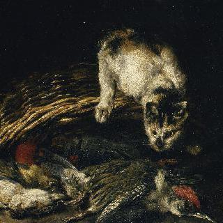 죽은 꿩에게 달려들려고 하는 고양이