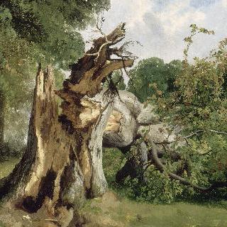 나무 줄기 습작