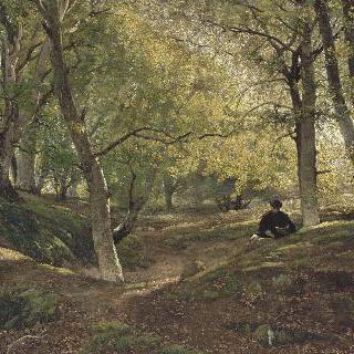 퐁텐블로의 너도밤나무 숲