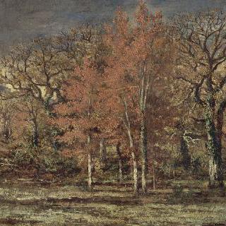 숲 가장자리, 가을의 체리나무