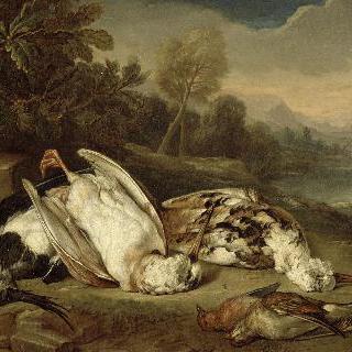 풍경 속의 죽은 사냥거리 : 하얀 멧도요새 두마리와 세마리 새