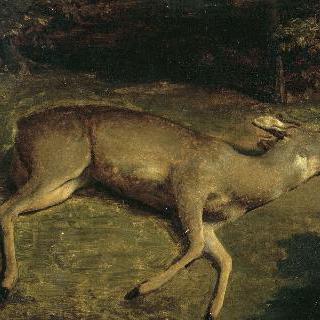 죽은 암사슴