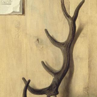 합판 밑에 놓인 사슴의 괴상한 뿔