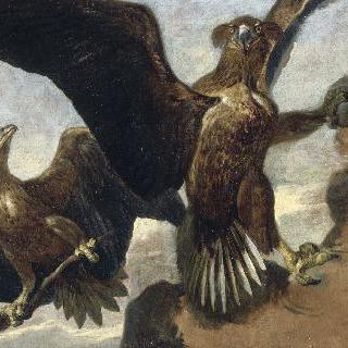 바위 위의 독수리 두 마리