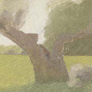 풀밭의 오래된 나무