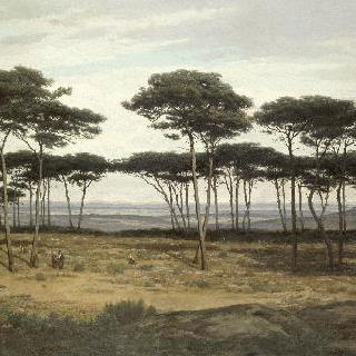 플레드리악의 소나무 숲