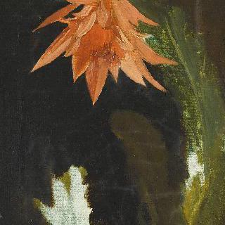 선인장 꽃