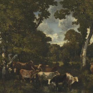 퐁텐블로 숲 바-브레오 (퐁텐블로 숲의 소떼)