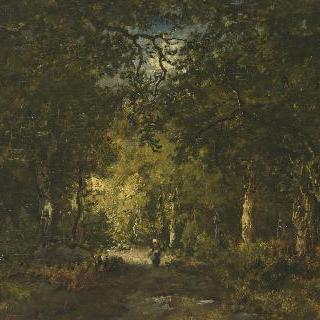 숲 속의 길