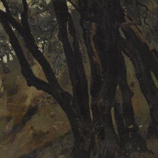 티볼리 마을의 올리브 나무들