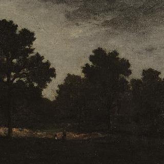 숲 속의 빈터