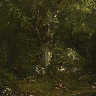 숲의 싱그러움 : 덤불숲
