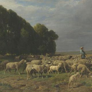 농장의 양떼