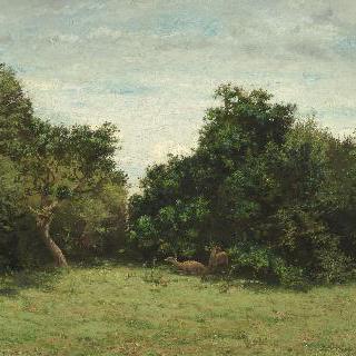 노루가 있는 작은 숲