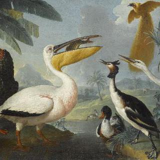 이국적인 새들