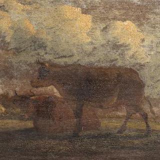 쉬고 있는 소들