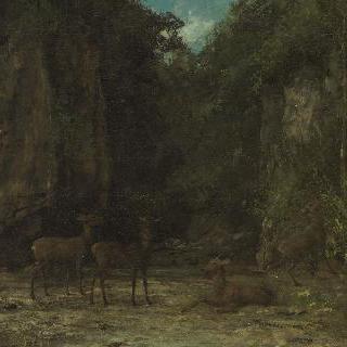 석양이 진 덤불숲 속 사슴들