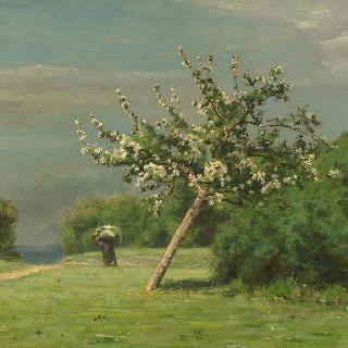 꽃이 핀 사과나무