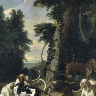 치명적 상처를 입은 사슴을 둘러 선 4마리의 개들