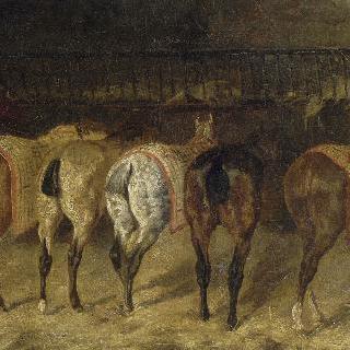 엉덩이가 보이는 마구간 안의 말 다섯마리