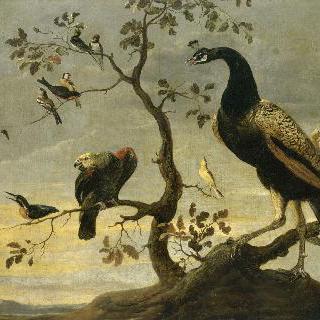 나뭇가지 위의 새들