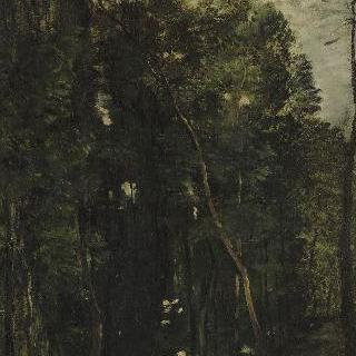 숲 속의 개울
