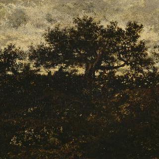벨크루아 언덕 (퐁텐블로 숲)