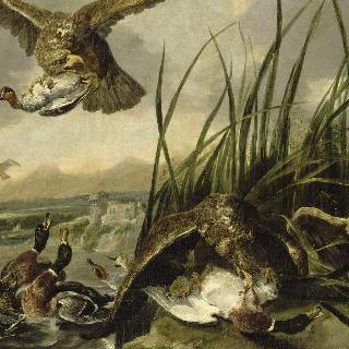 오리들을 공격하는 독수리떼