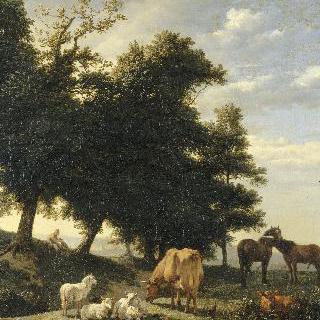 작은 목장. 숲 속의 말과 소와 암양