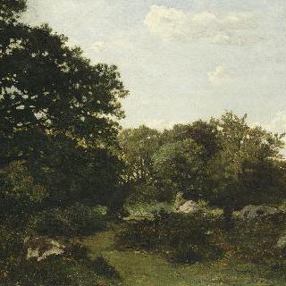 퐁텐블로 숲