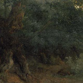 나무줄기, 뿌리와 잎