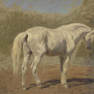 흰 말 습작