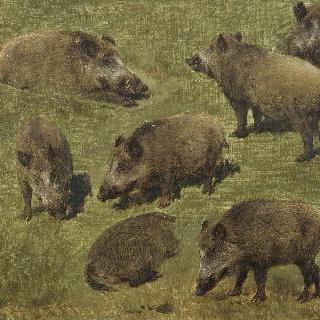누워있는 멧돼지와 서있는 멧돼지, 초안 7점