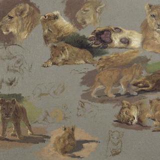 숫사자와 암사자, 새끼 사자의 습작
