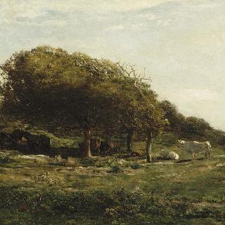 칼바도스의 그라브 목장