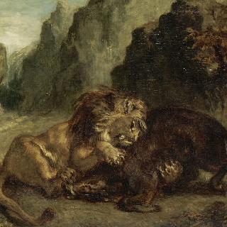 사자와 멧돼지