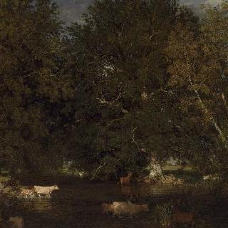 솔로뉴의 몽불랑 냇가를 건너는 황소들