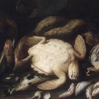 거북이와 물고기
