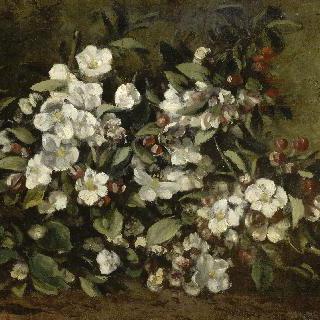 꽃이 핀 사과 나무 가지 (체리나무의 꽃)