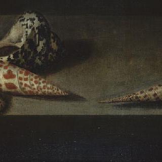 도마뱀과 조개