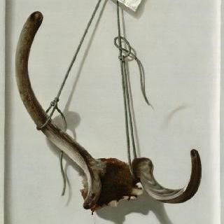 1767년 6월 10일 생 위베르에서 왕이 사냥한 사슴뿔